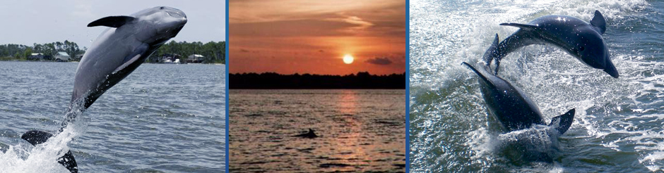 alabama gulf coast wild dolphin sunset charters in Orange Beach jumping gulf shores dolphins