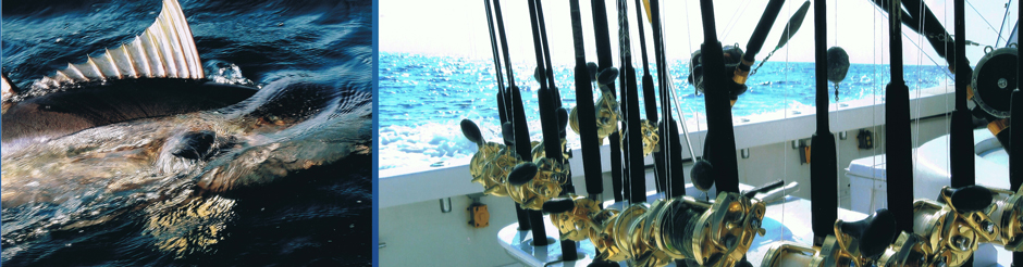 gulf of mexico marlin fishing from Orange Beach AL luxury charter boat fishing tackle