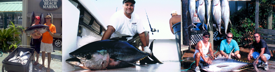orange beach al overnight blue water trips yellowfin tuna