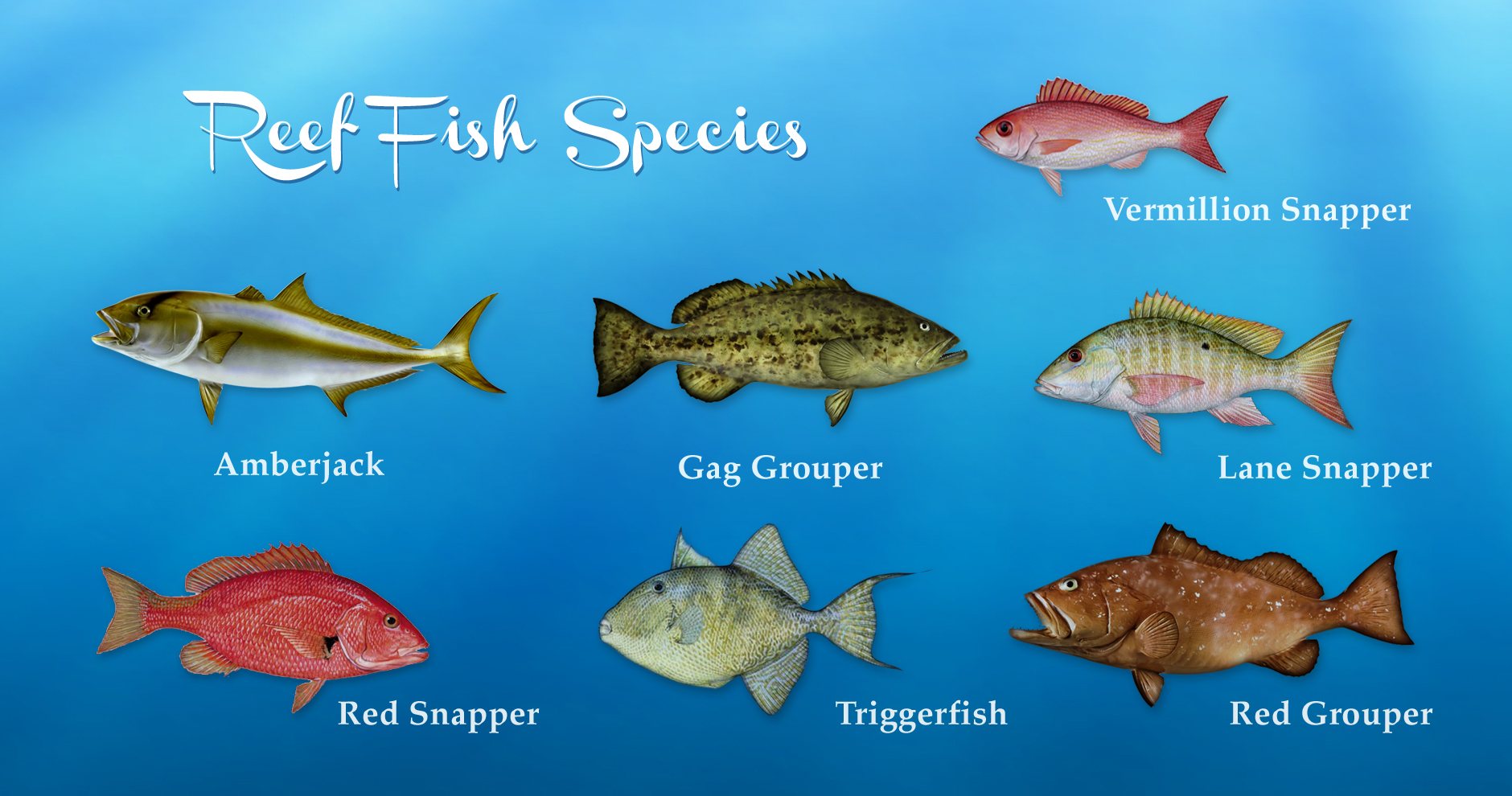 reeffish_species