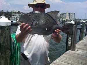 gulf of Mexico gray triggerfish and angler Charles M. Smith
