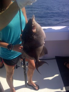 AL Gulf Coast Triggerfish