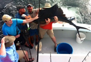 gulf of mexico sailfish caught aboard Cool Breeze 8 hr shared expense deep sea fishing charter