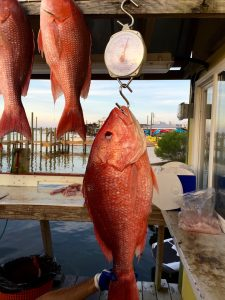 huge red snapper caught on a afternoon walk on deep sea fishing charter on the AL Gulf Coast