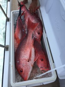 re snapper catch 8 HR AL deep sea fishing trip on charter boat Jus Cuz
