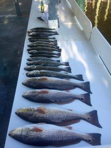 Gulf Coast Redfish & Speckled Trout along the AL Gulf Coast