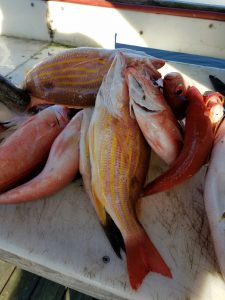 Deep Sea Fishing snappers AL Gulf Coast Party Boat Trip