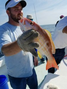 snapper fishing in the Gulf of Mexico