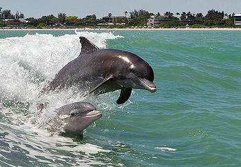 Dolphins Alabama In Wave